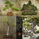 盆栽のイメージ素材
