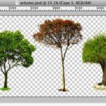 木の切抜済PSD素材