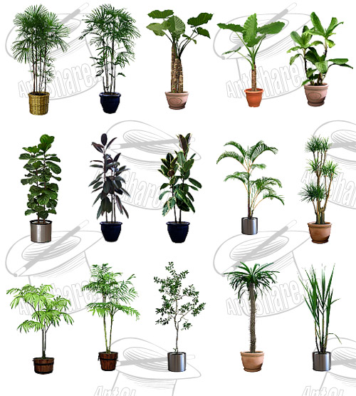 観葉植物PNG素材